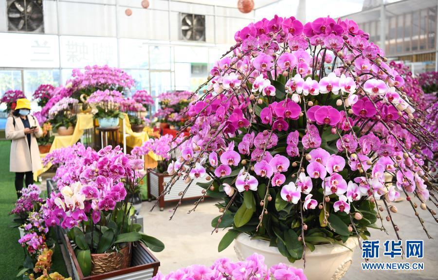 Расцветают цветы с приближением праздника Весны