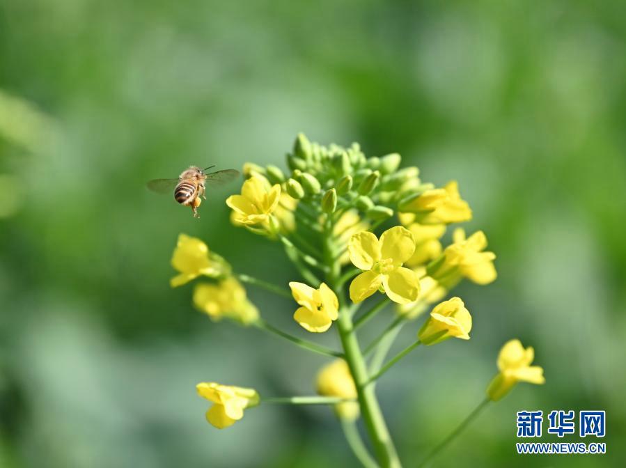 Весна в пригороде Фучжоу провинции Фуцзянь