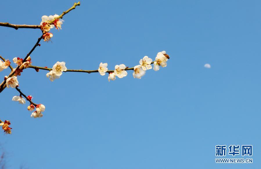 Весна идет! Весне дорогу!