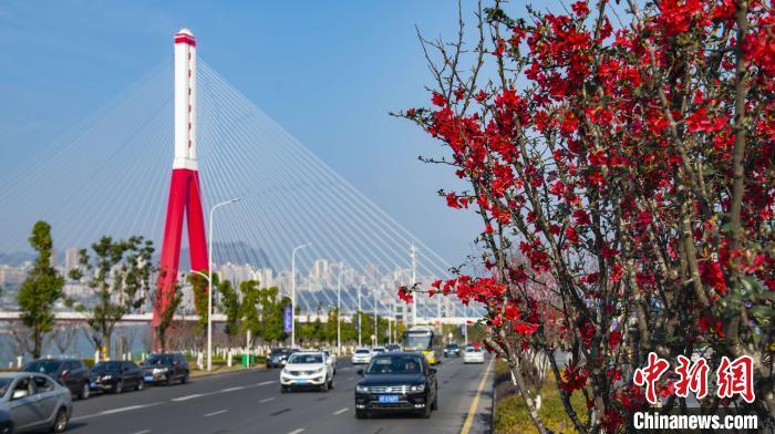 Район Ваньчжоу в городе Чунцин наполнен цветами