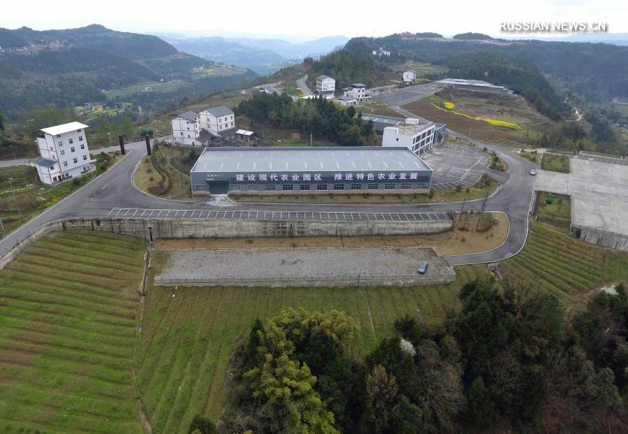 Выращивание китайского зантоксилума обогащает крестьян уезда Пинчан