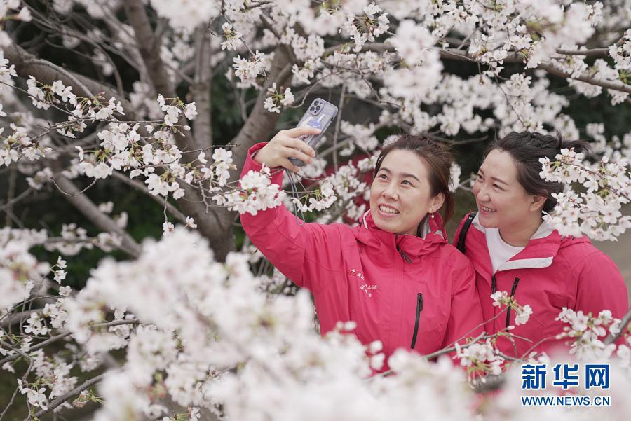 Город Ухань пригласил боровшихся с COVID-19 медработников полюбоваться цветами сакуры
