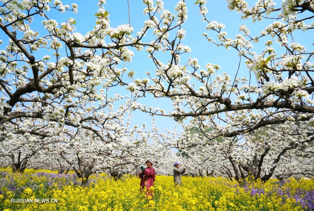 Хлопоты садоводов в Цзиньчжоу