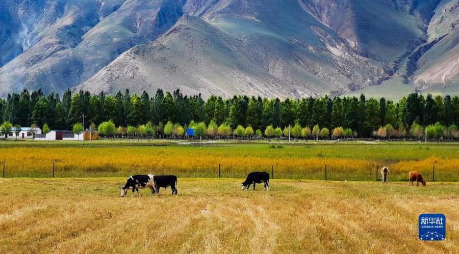 Очаровательные осенние пейзажи в Тибете