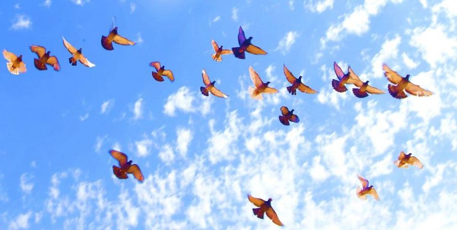 Компания «Сибу»: голуби пролетают над буровой площадкой