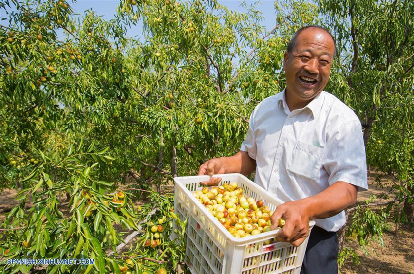 Muchas partes de China han entrado en la temporada de cosecha en este otoño