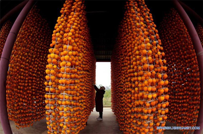 Cosecha de caqui en Shaanxi