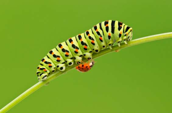 La increíble belleza de los insectos iluminados por los amaneceres y los atardeceres