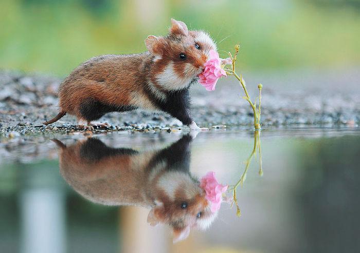 Hamster web porno