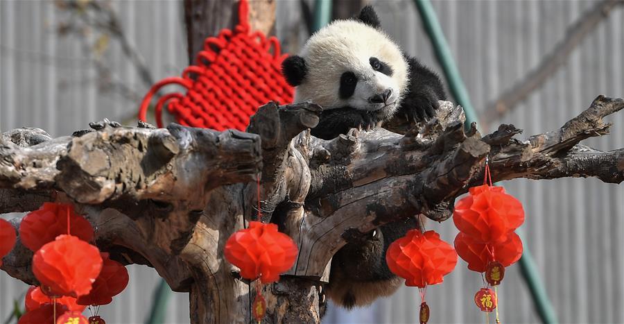 CHINA-SICHUAN-PANDA GIGANTE-NUEVOS DATOS-SERIE
