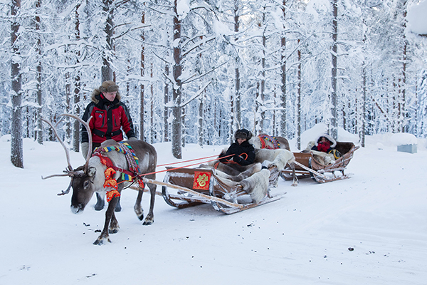 Chinese tourists ride elk-driven sleighs in a small forest in Finland. [Photo provided to China Daily]