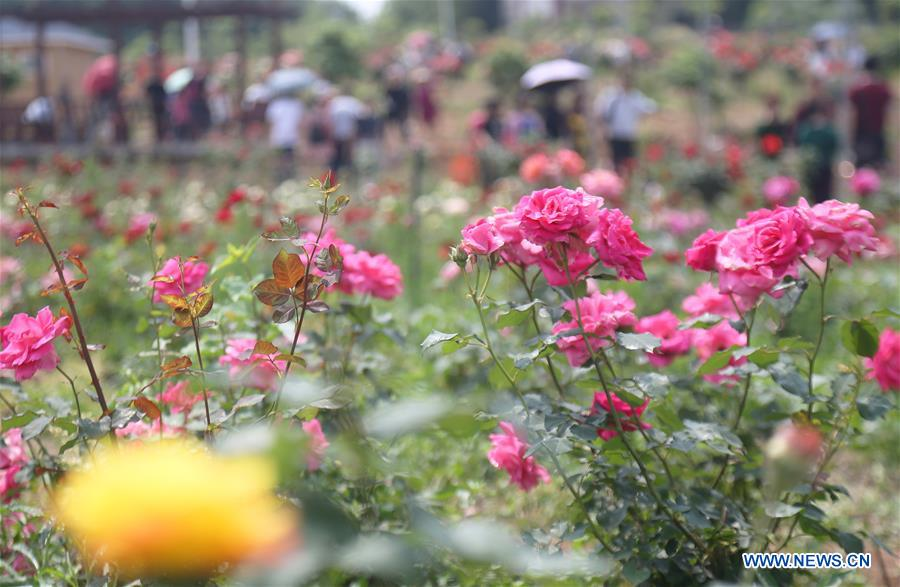 Spring flowers bloom across China - China.org.cn