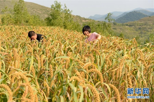 """我国设立""""中国农民丰收节"""""""