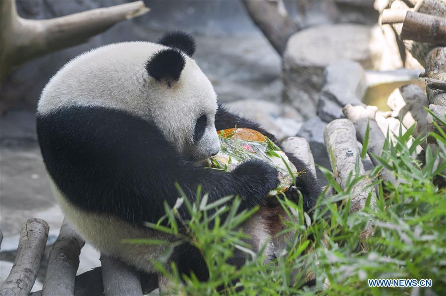 Giant Panda Twins Celebrate 3rd Birthday In Nanjing China