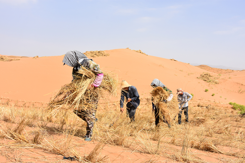 Sand control project pays off in Ningxia