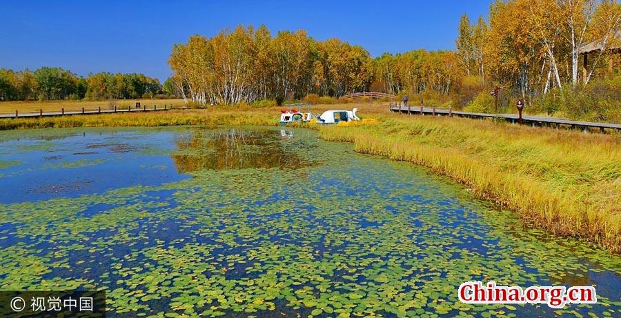 Autumn scenery of Saihanba