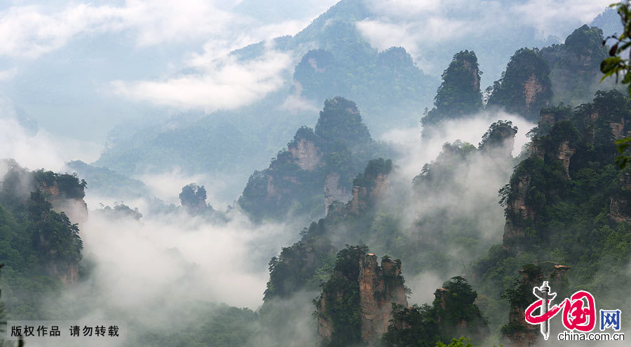 China sees forest travel boom in 2018