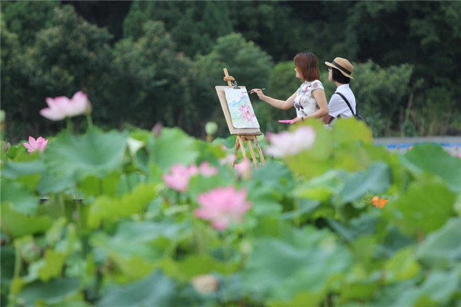 Lotus Flowers In China Add Color To Summer Chinaorgcn