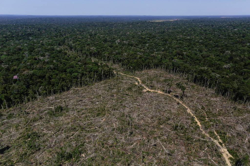 The crisis facing our 'Planet's Lungs'